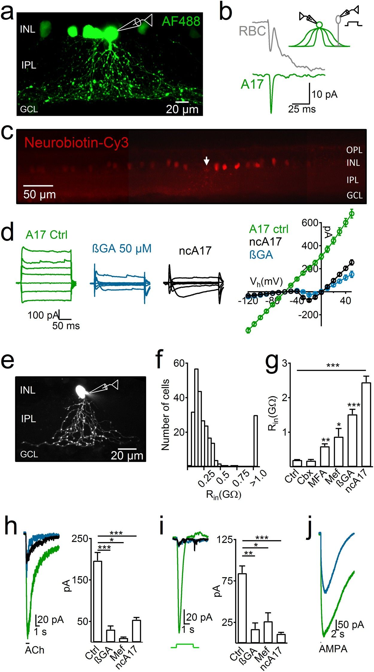 Electrical Coupling Between A17 Cells Enhances Reciprocal Inhibitory Circuit Using A Visual Indicator Can Be Useful For An Rf Feedback To Rod Bipolar Scientific Reports