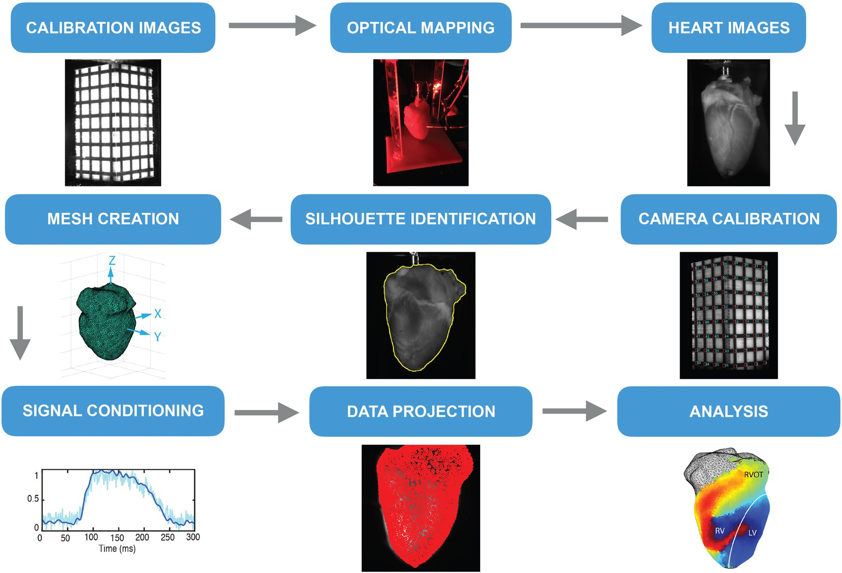 RHYTHM: An Open Source Imaging Toolkit for Cardiac Panoramic Optical  Mapping | Scientific Reports