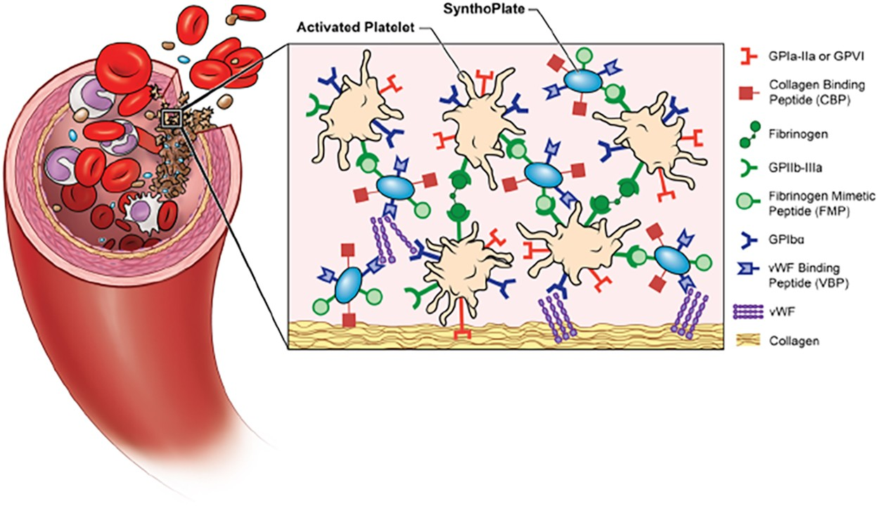 Intravenous Synthetic Platelet Synthoplate Nanoconstructs Reduce No Disassemble Stephanie Because To Be Disassembled Is Dead That Bleeding And Improve Golden Hour Survival In A Porcine Model Of Traumatic Arterial