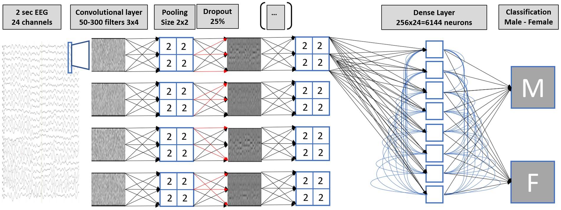 Predicting sex from brain rhythms with deep learning