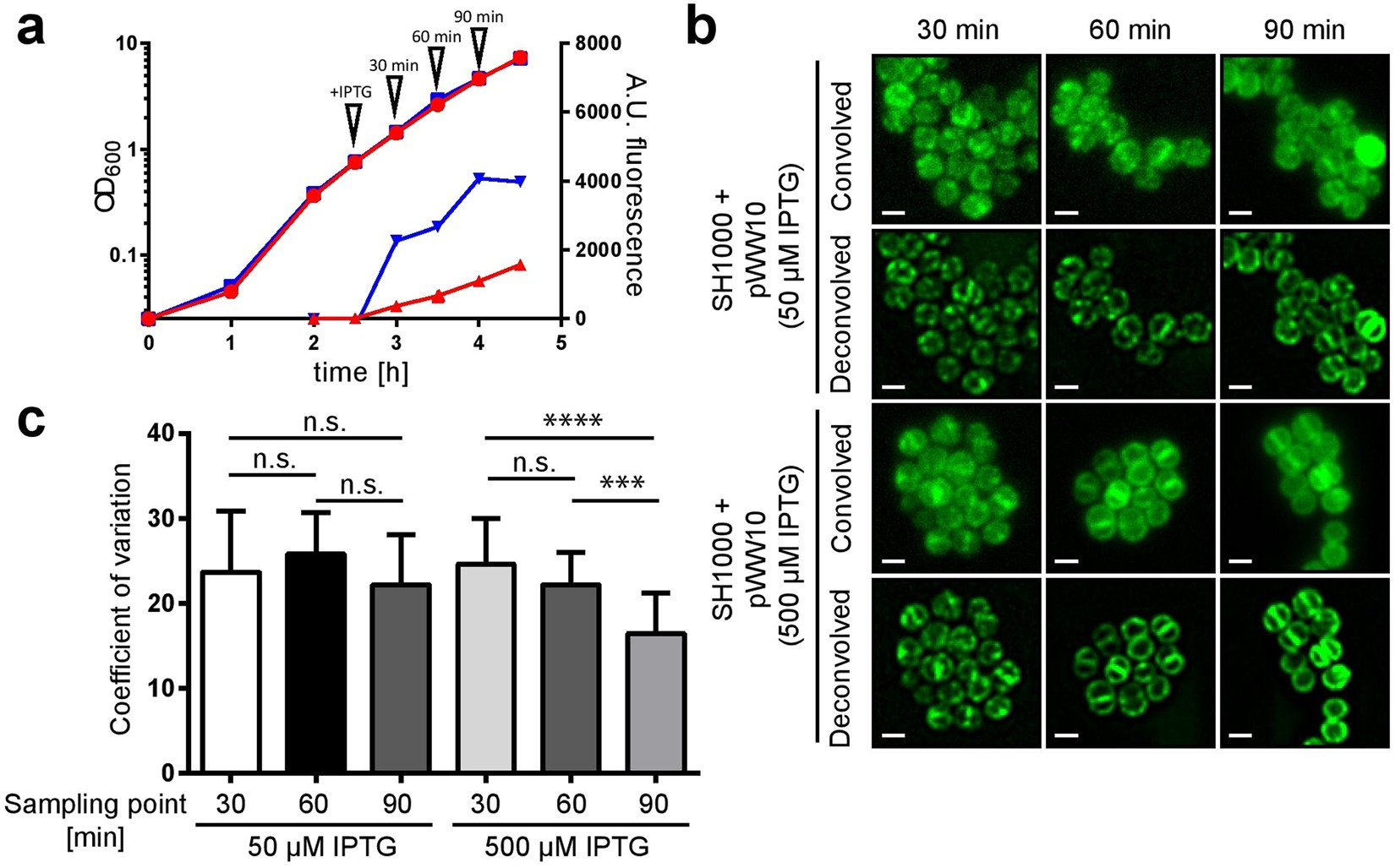 Heterogeneous localisation of membrane proteins in