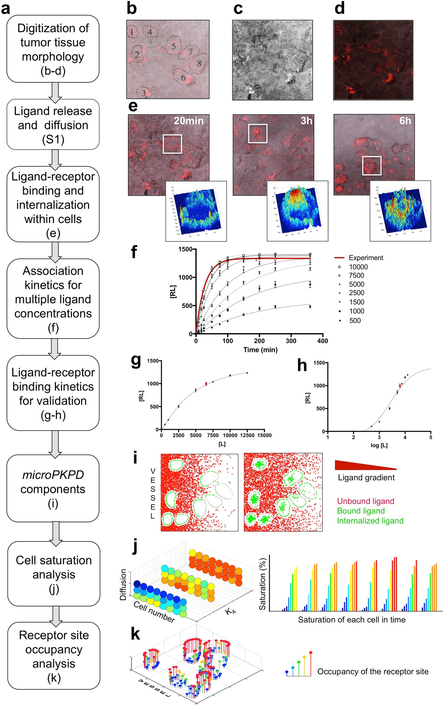 Targeting Ligand Specificity Linked To Tumor Tissue Topological Infra Red Light Barrier Using 555 Heterogeneity Via Single Cell Micro Pharmacological Modeling Scientific Reports