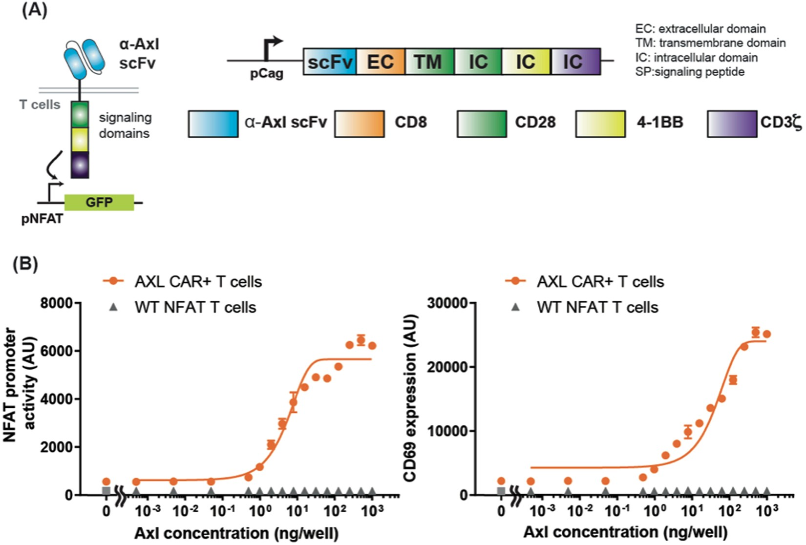 Engineering Axl specific CAR and SynNotch receptor for cancer