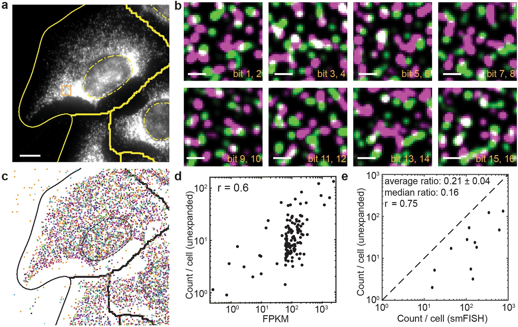 Imaging Approaches Expand View Into >> Multiplexed Imaging Of High Density Libraries Of Rnas With Merfish