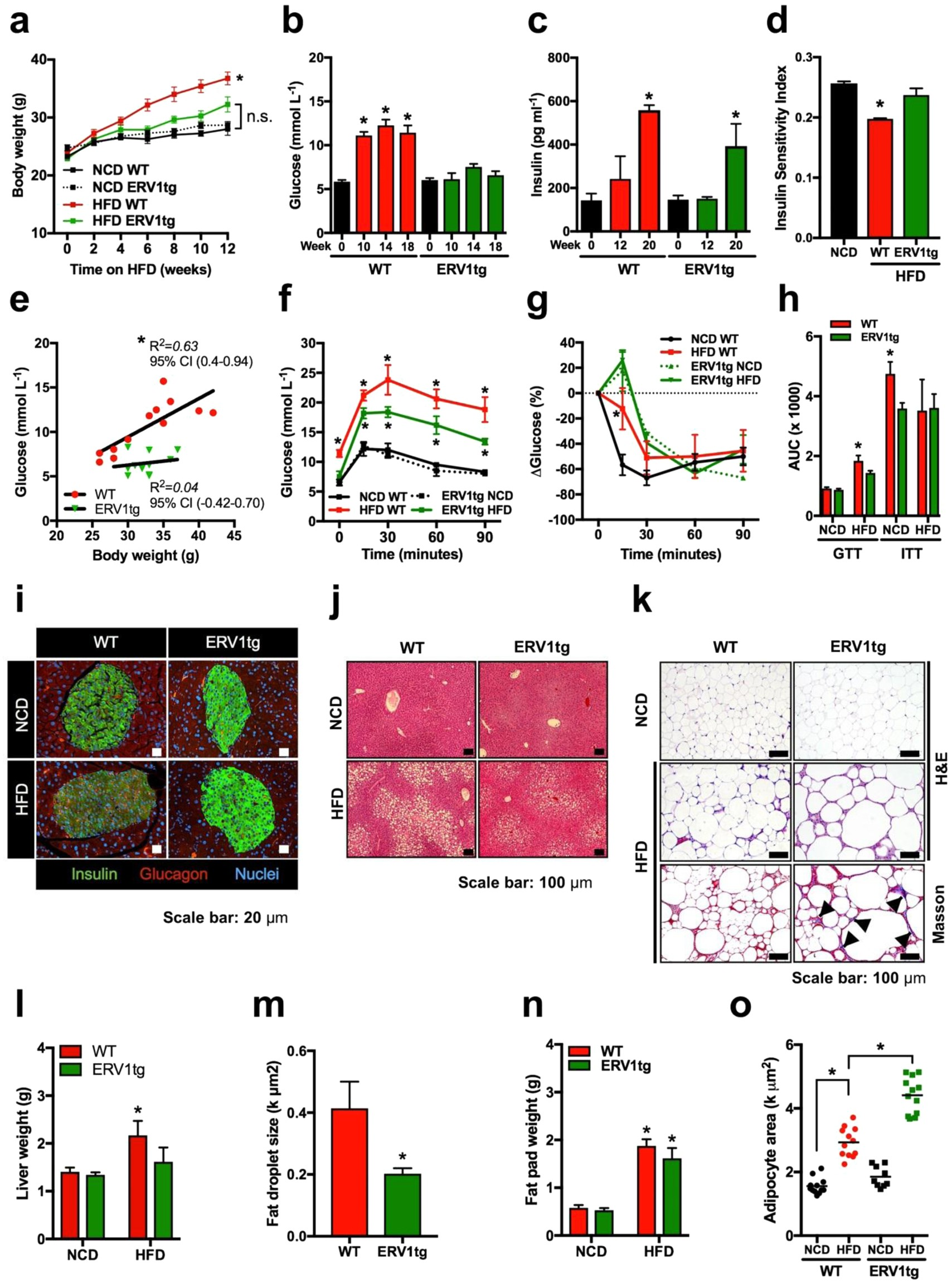 Author Hfd >> Author Correction Erv1 Overexpression In Myeloid Cells Protects