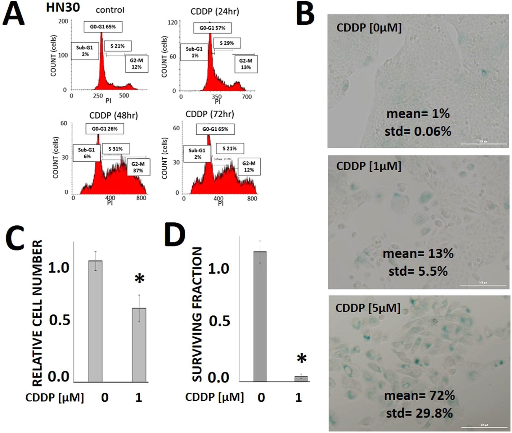 Cisplatin generates oxidative stress which is accompanied by rapid