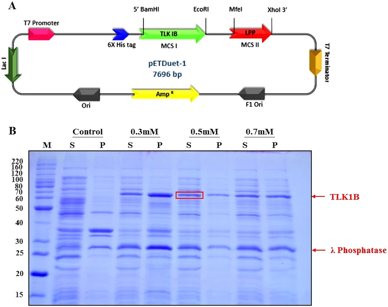 High Yield Bacterial Expression Purification And Characterisation Information Society 10 Watt Amplifier Electronic Circuit Schematic Of Bioactive Human Tousled Like Kinase 1b Involved In Cancer Scientific Reports