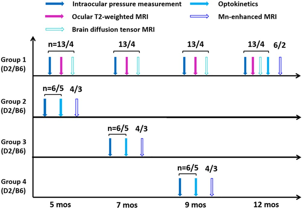 Age Related Changes In Eye Brain And Visuomotor Behavior In The Dba