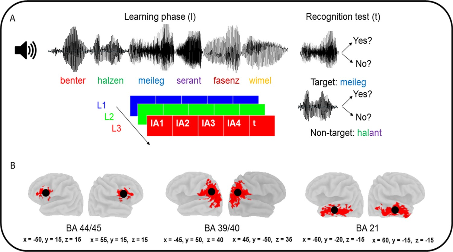 Theta Coherence Asymmetry in the Dorsal Stream of Musicians Facilitates  Word Learning | Scientific Reports