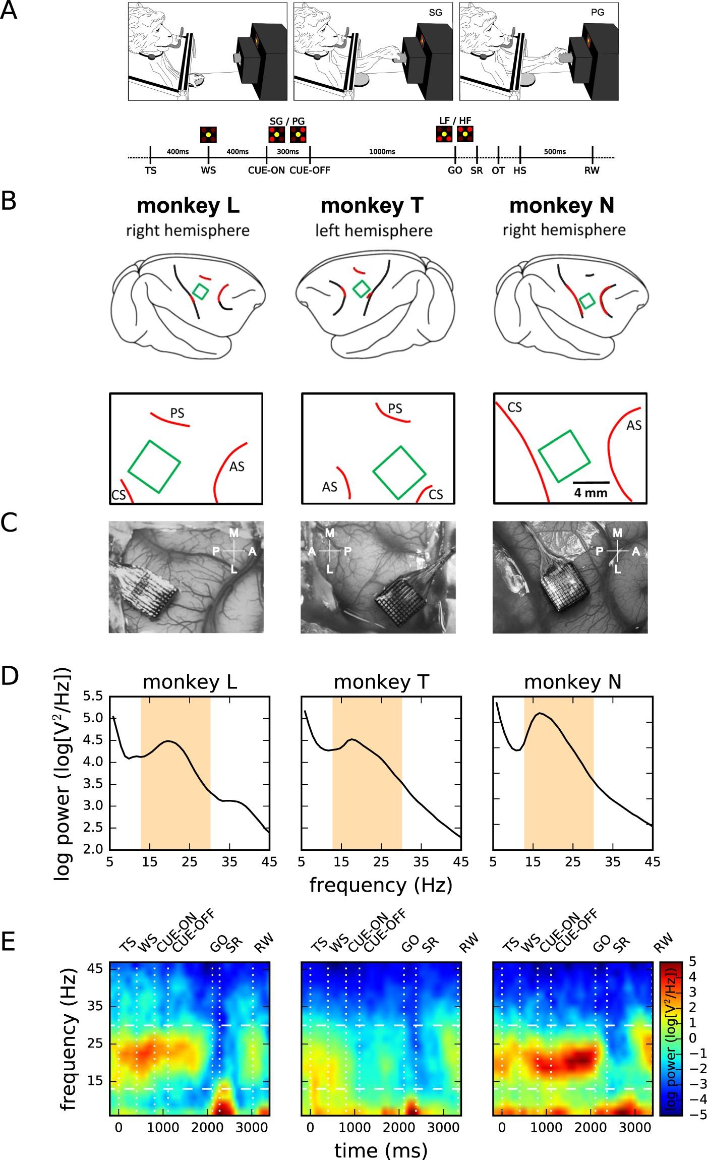 LFP beta amplitude is linked to mesoscopic spatio-temporal