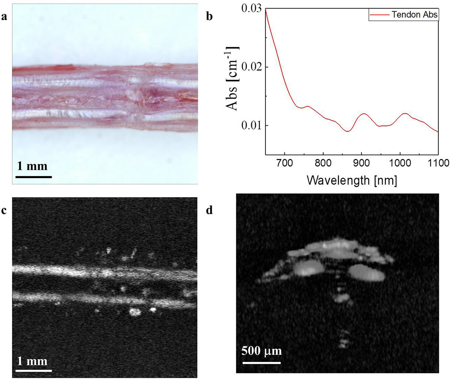Label-free photoacoustic microscopy for in-vivo tendon imaging using a  fiber-based pulse laser | Scientific Reports
