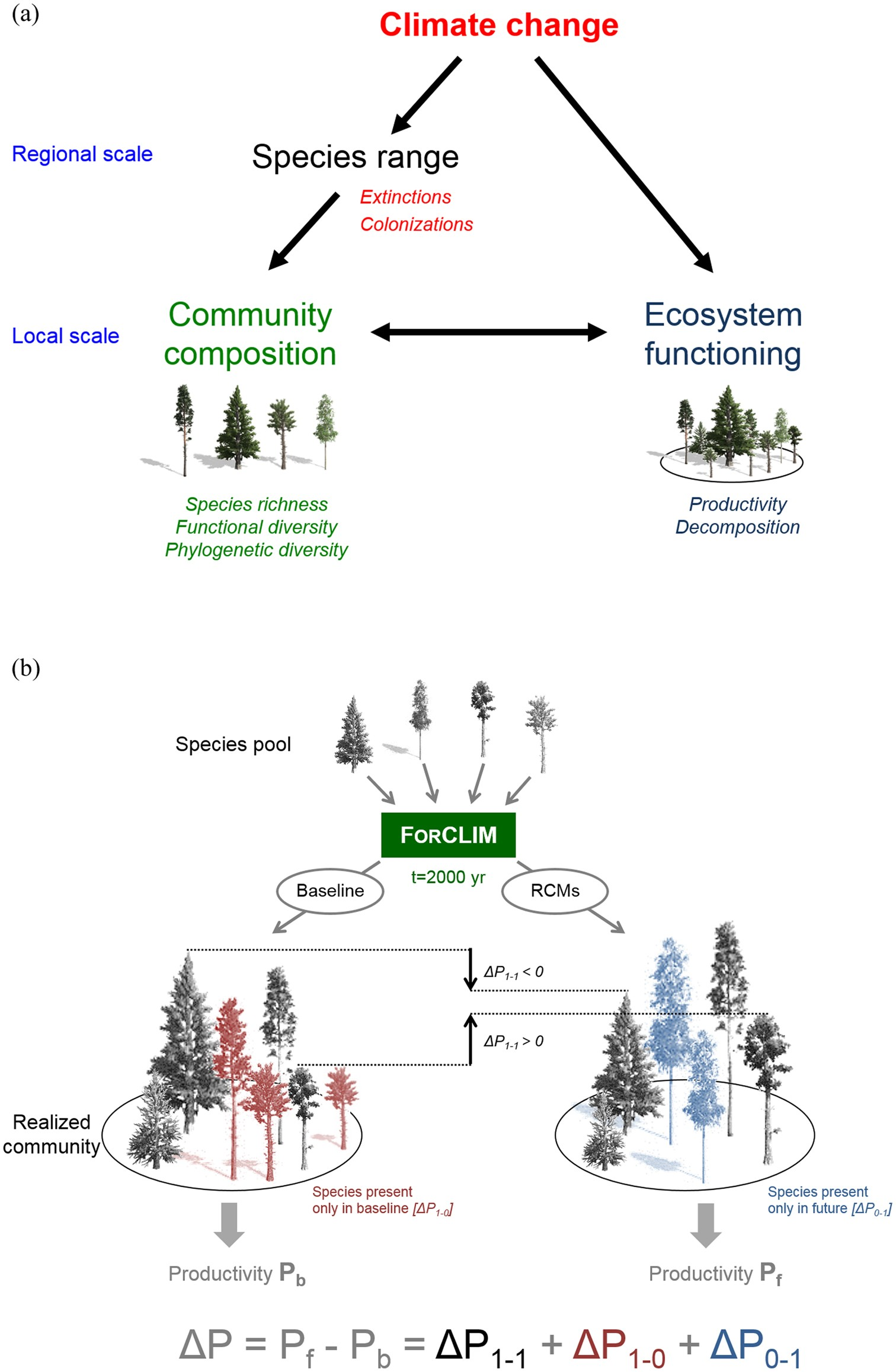 Long-term response of forest productivity to climate change