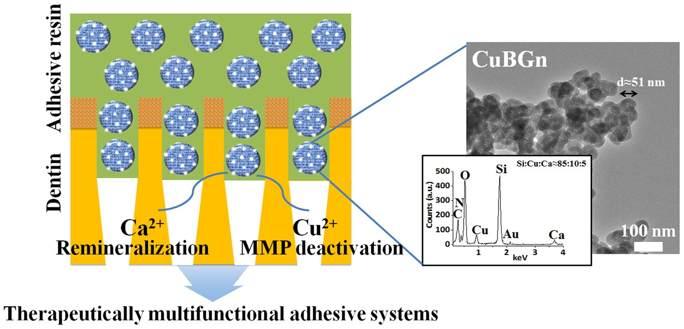 ae762a73e32b Multi-functional nano-adhesive releasing therapeutic ions for  MMP-deactivation and remineralization