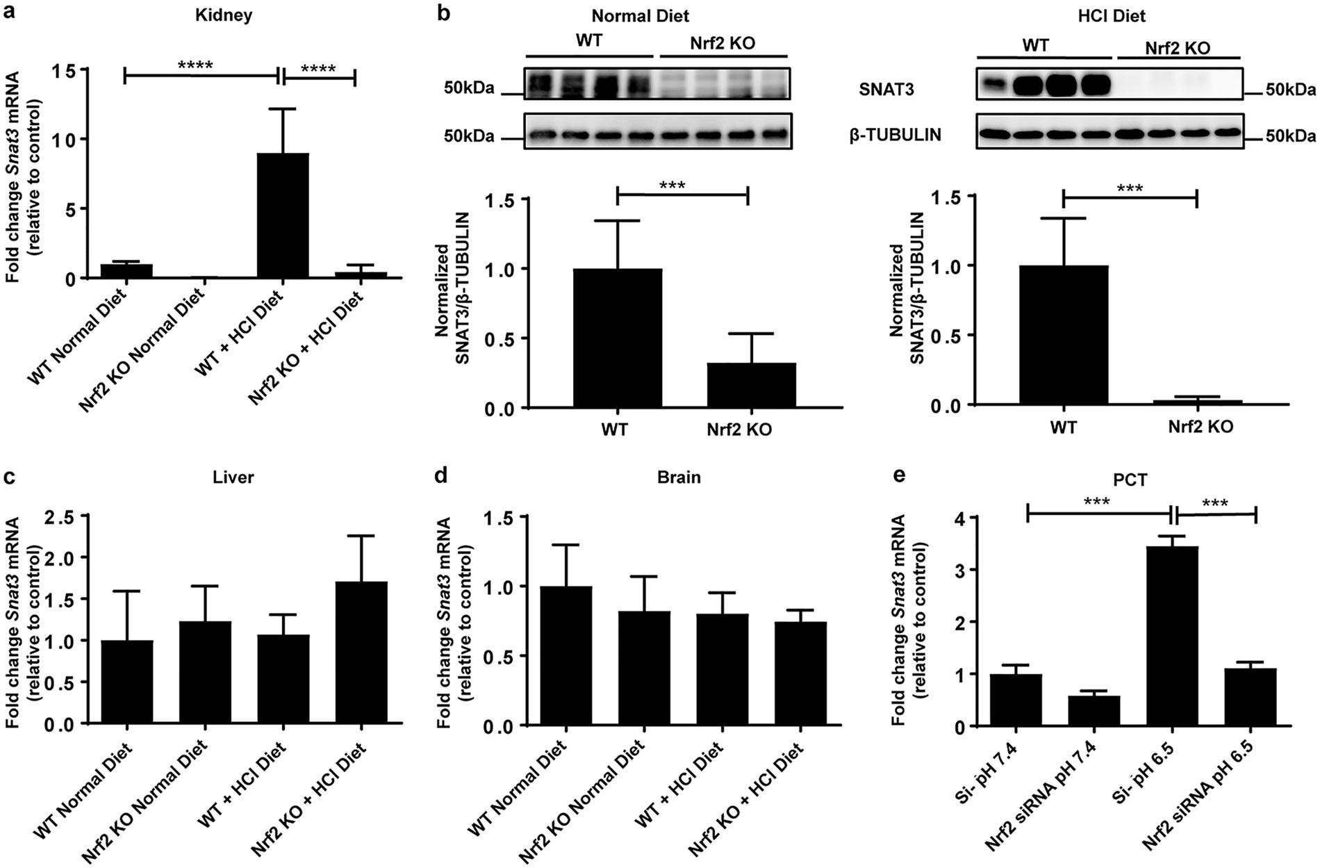 NRF2 Regulates The Glutamine Transporter Slc38a3 SNAT3 In Kidney