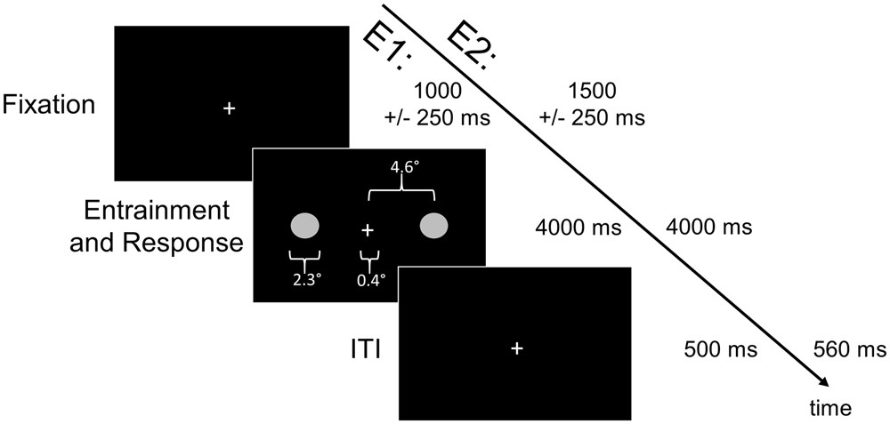 Entrainment of theta, not alpha, oscillations is predictive