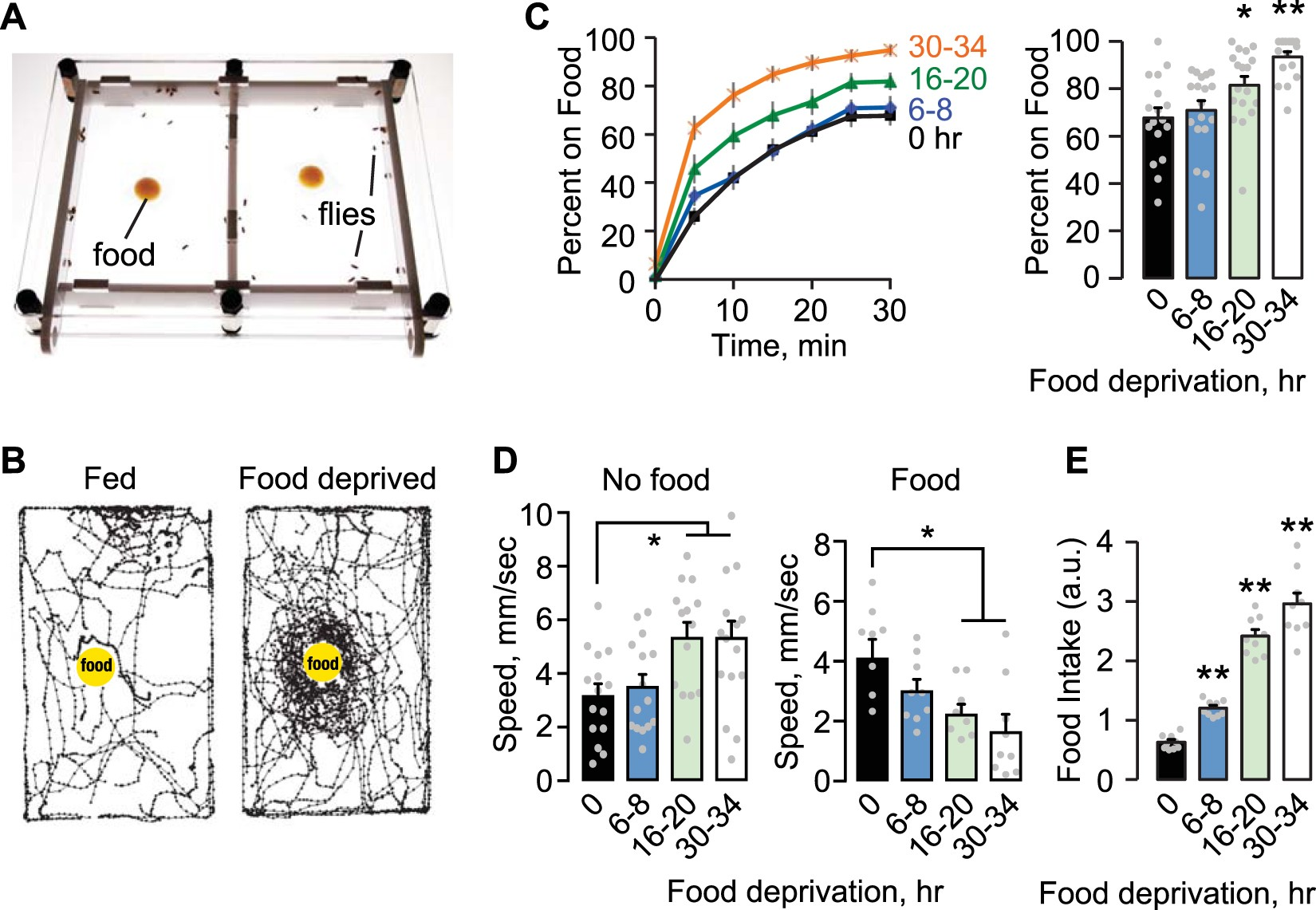 Satiation State Dependent Dopaminergic Control Of Foraging In