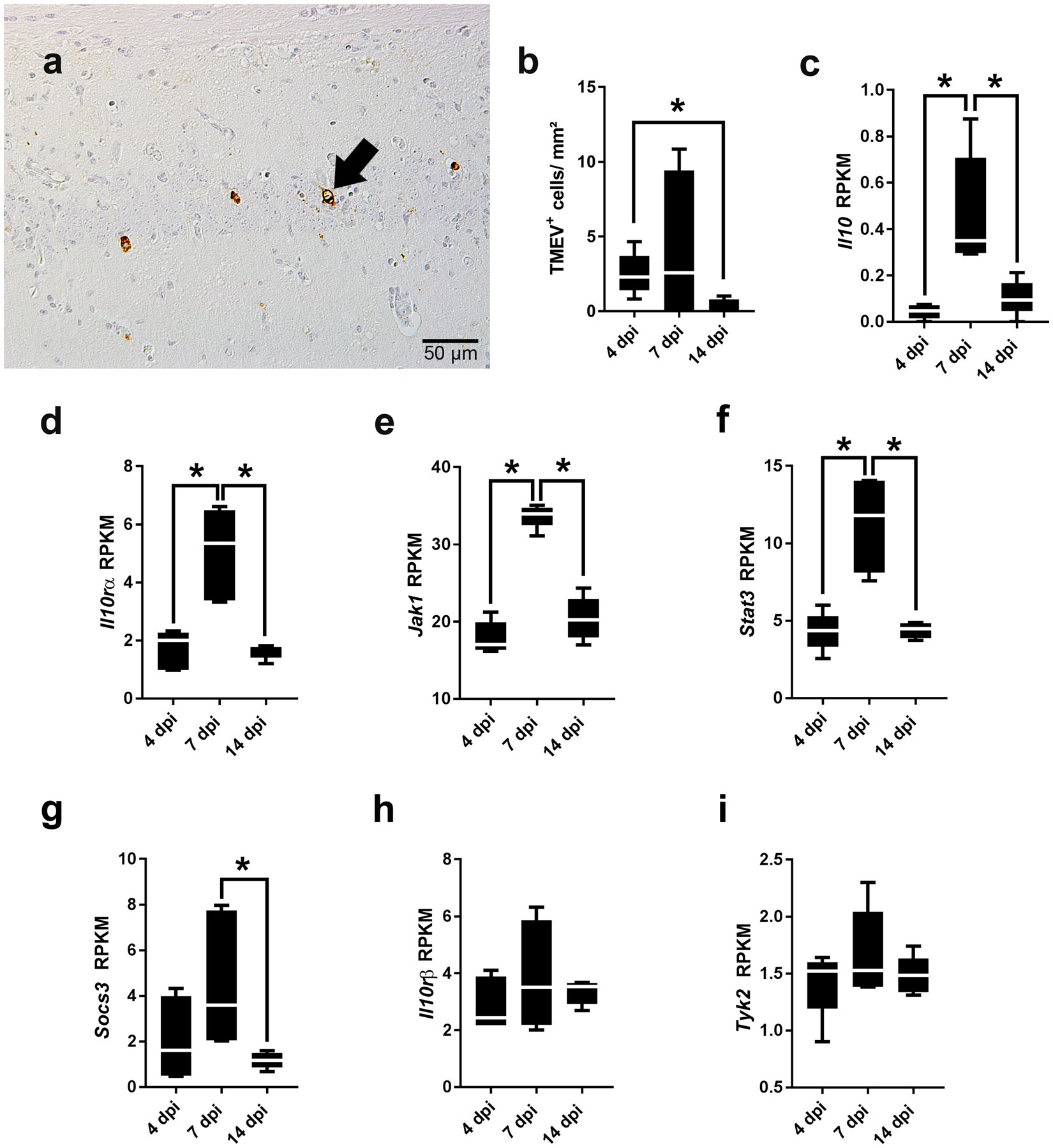 Intact interleukin-10 receptor signaling protects from hippocampal damage  elicited by experimental neurotropic virus infection of SJL mice |  Scientific ...