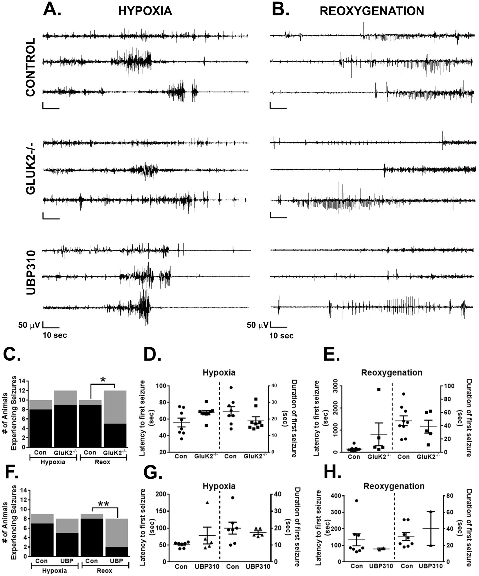 The Role of Kainate Receptors in the Pathophysiology of