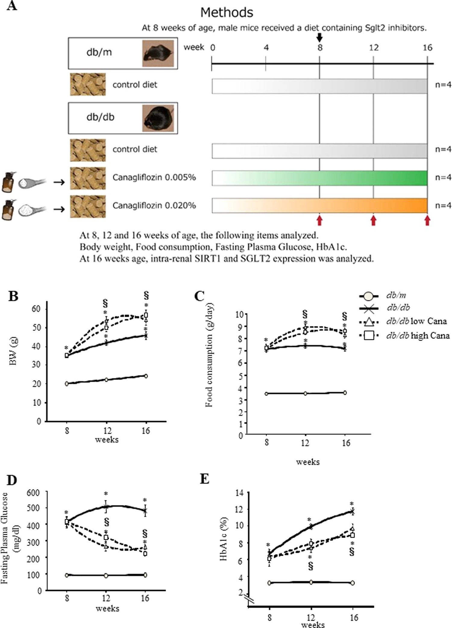 High Basolateral Glucose Increases Sodium-Glucose