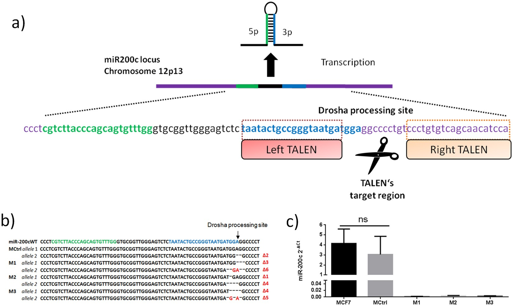 A proteomic analysis of an in vitro knock-out of miR-200c