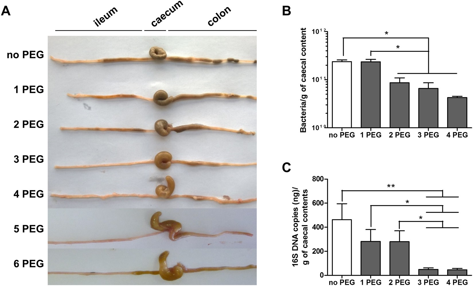 Transplantation of human microbiota into conventional mice durably
