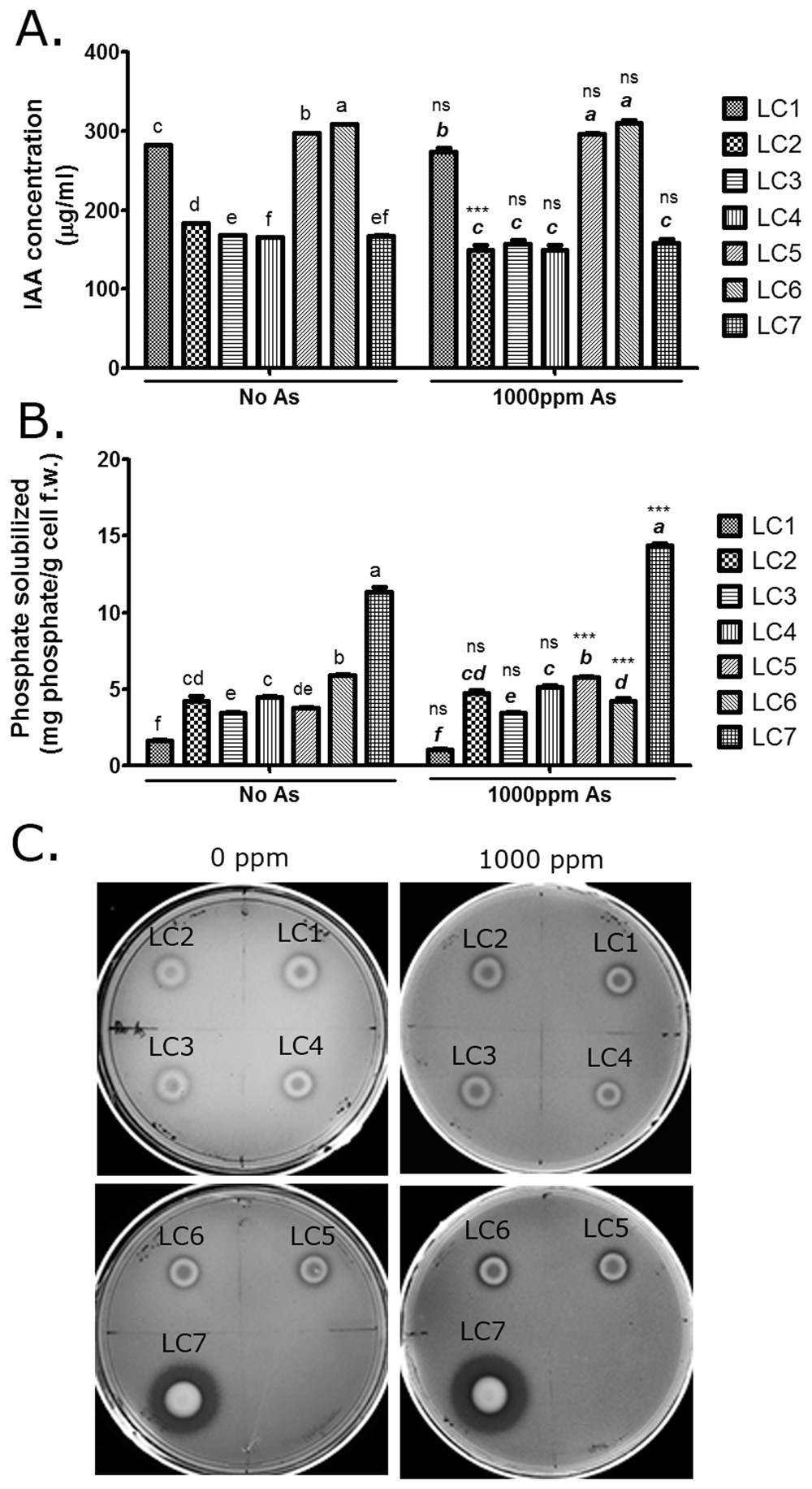 An Endophytic Bacterial Consortium modulates multiple strategies to ...
