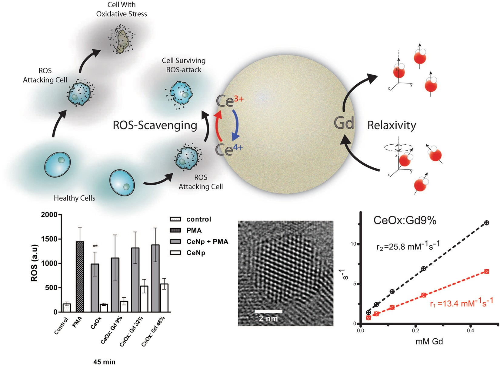 Cerium Oxide Nanoparticles With Antioxidant Capabilities And Mm 2 58t Wiring Diagram For Thermostat Gadolinium Integration Mri Contrast Enhancement Scientific Reports