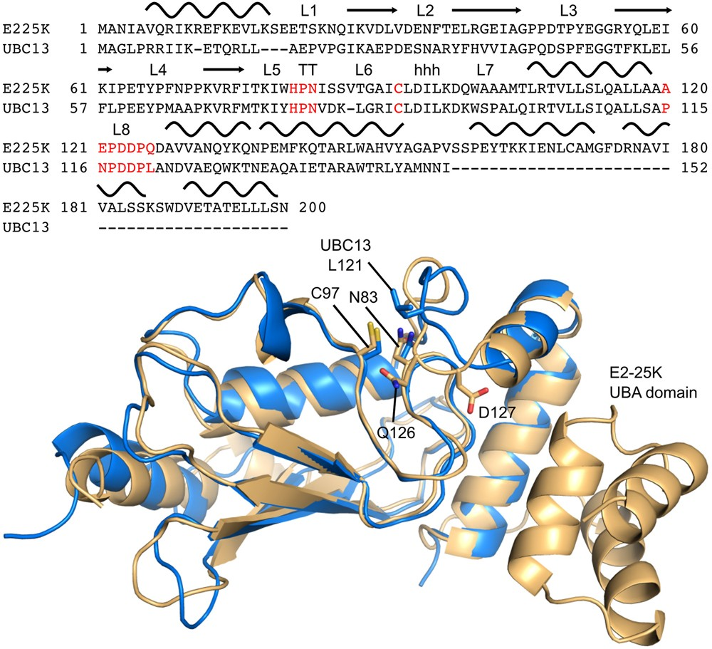 what is the active site of an enzyme and why is it important