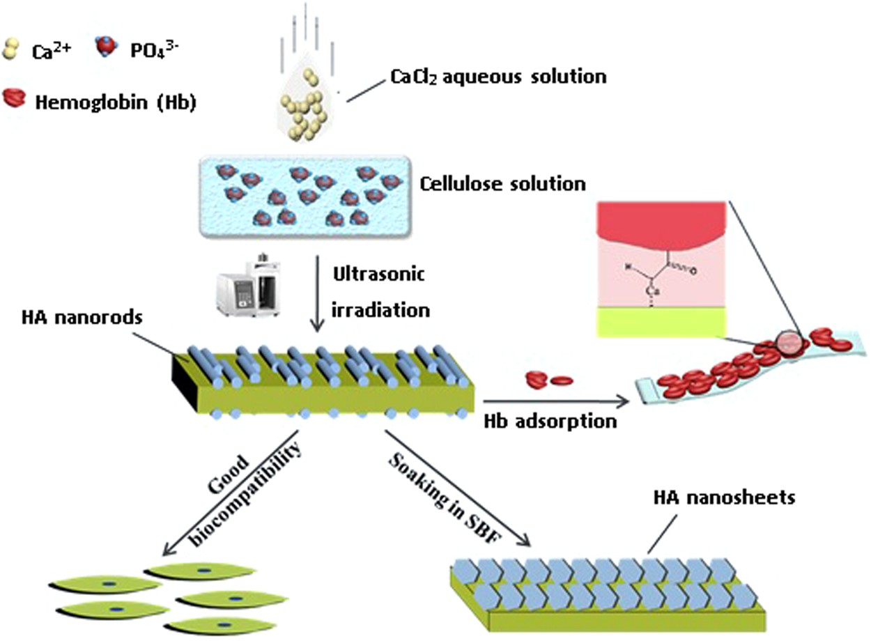 Sonochemical synthesis of cellulose/hydroxyapatite nanocomposites and their  application in protein adsorption | Scientific Reports