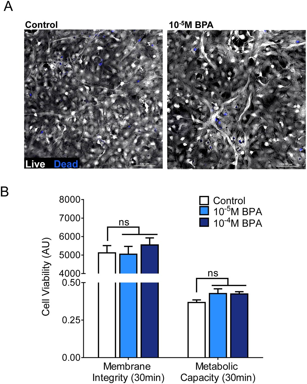 Bpa Seems To Alter Communication For >> Disruption Of Neonatal Cardiomyocyte Physiology Following Exposure