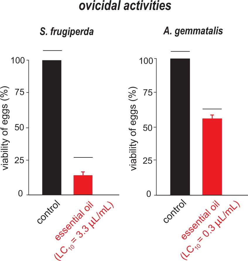 Essential oil of Siparuna guianensis as an alternative tool