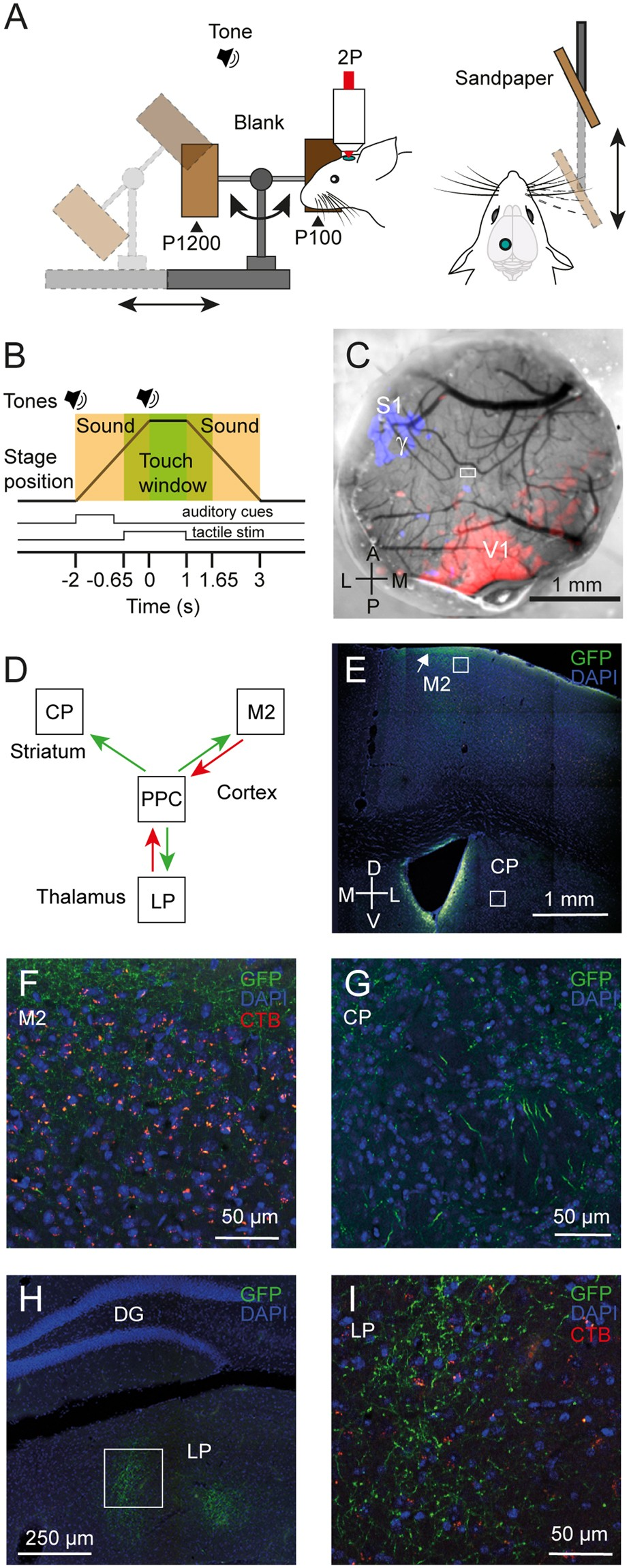 Sensory Representation Of An Auditory Cued Tactile Stimulus In The To Build Usb Power Injector For External Hard Drives Circuit Diagram Posterior Parietal Cortex Mouse Scientific Reports
