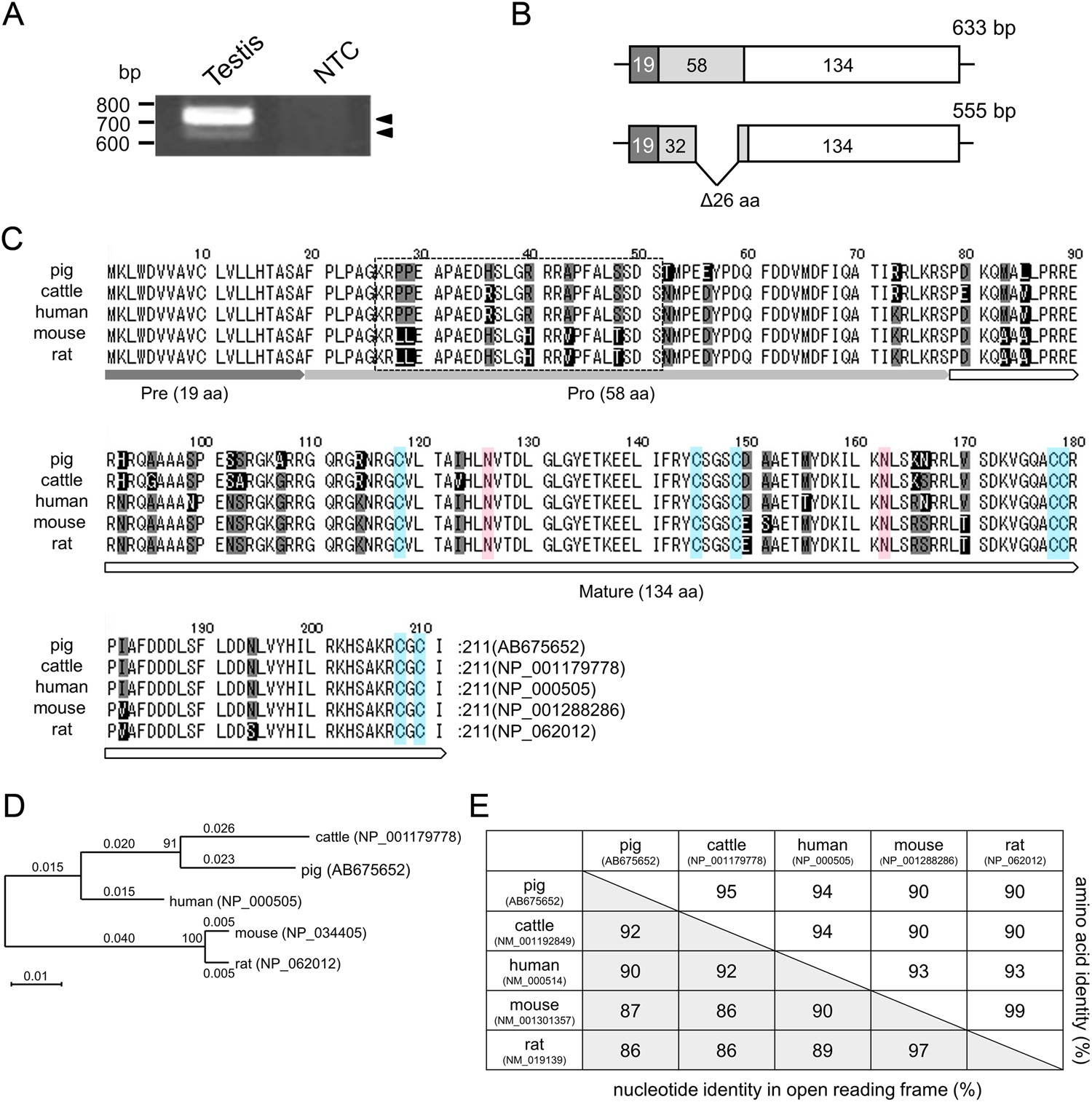 Conserved and non-conserved characteristics of porcine glial cell