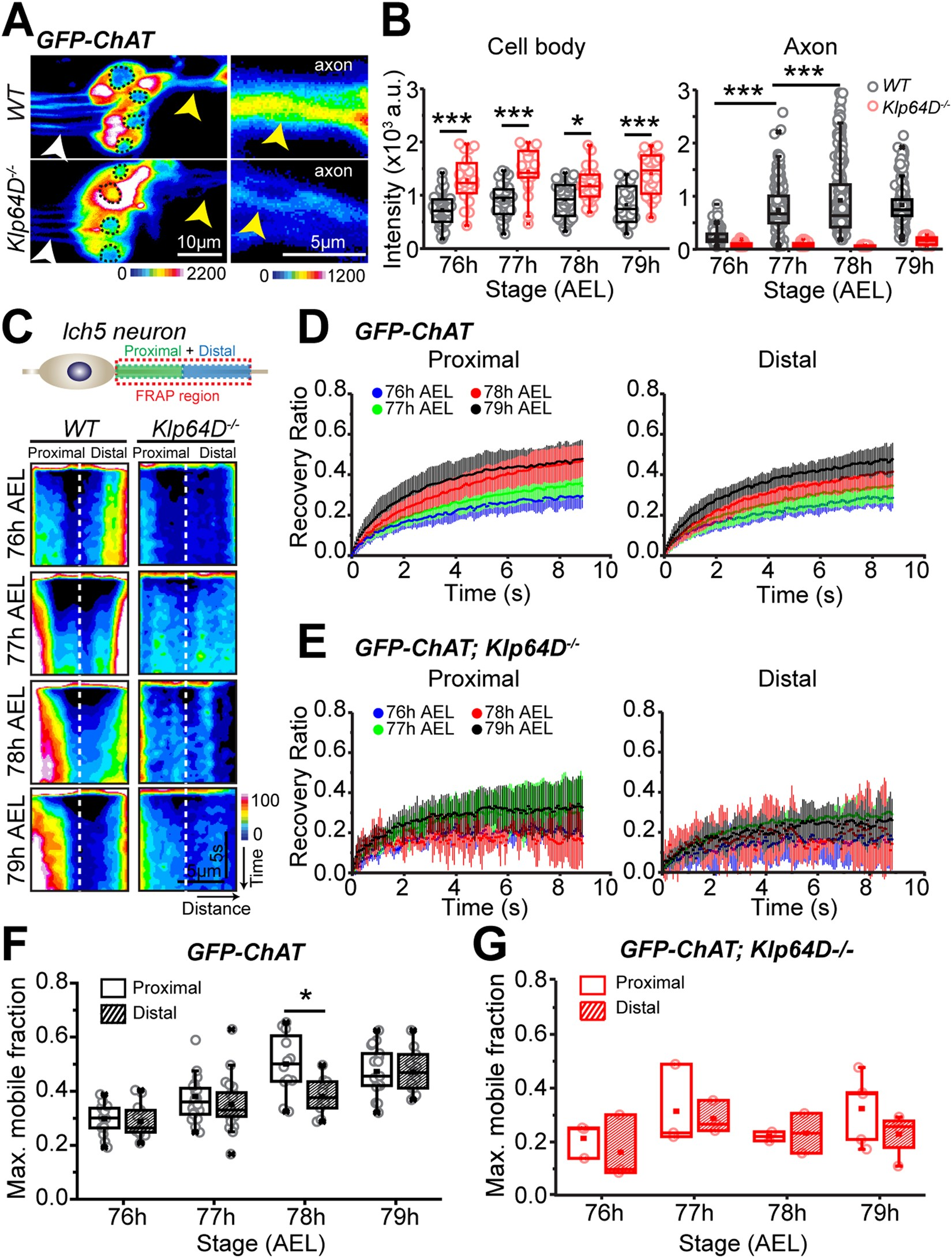 Cholinergic Activity Is Essential For Maintaining The Anterograde Above A Schematic Diagram Of An Lm741 Light Dark Sensor Circuit Transport Choline Acetyltransferase In Drosophila Scientific Reports