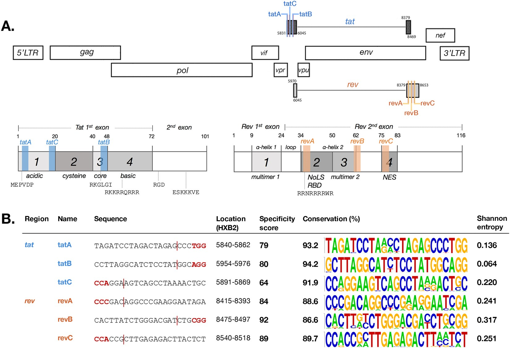 CRISPR/Cas9 system targeting regulatory genes of HIV-1