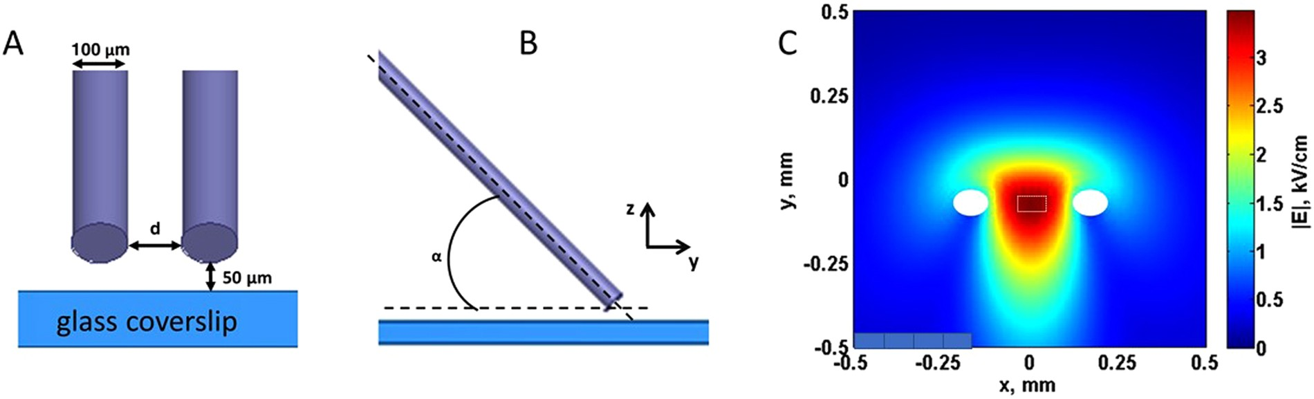 Excitation And Injury Of Ventricular Cardiomyocytes By Nano To Millisecond Electric Shocks Scientific Reports