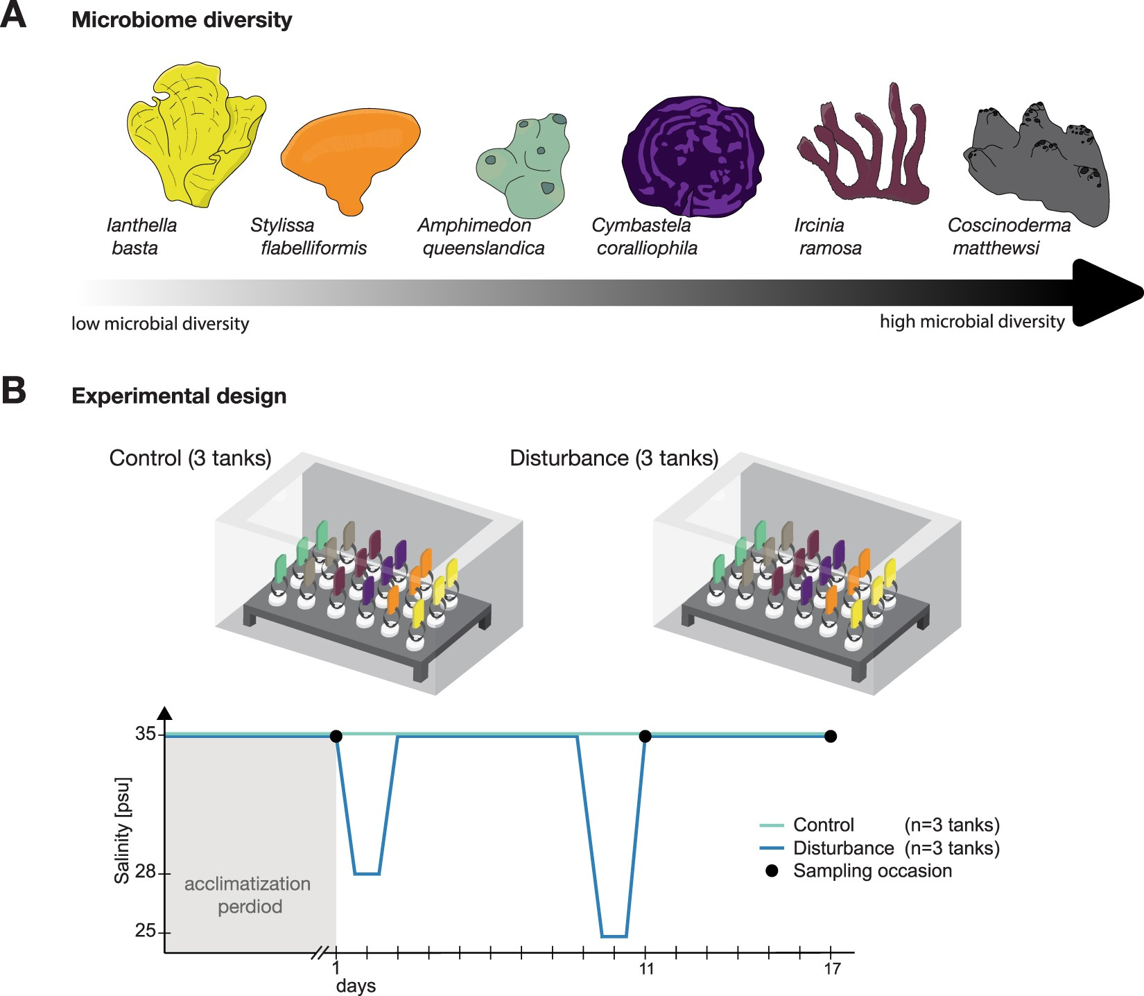 Exploring the diversity-stability paradigm using sponge