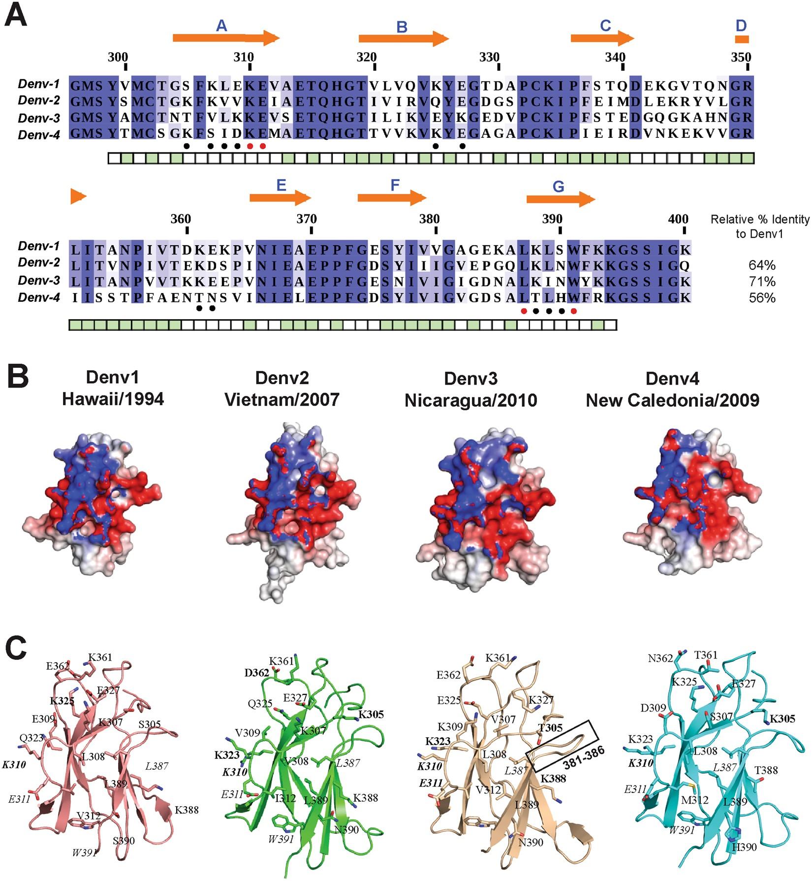 Molecular basis for dengue virus broad cross neutralization by humanized monoclonal antibody 513