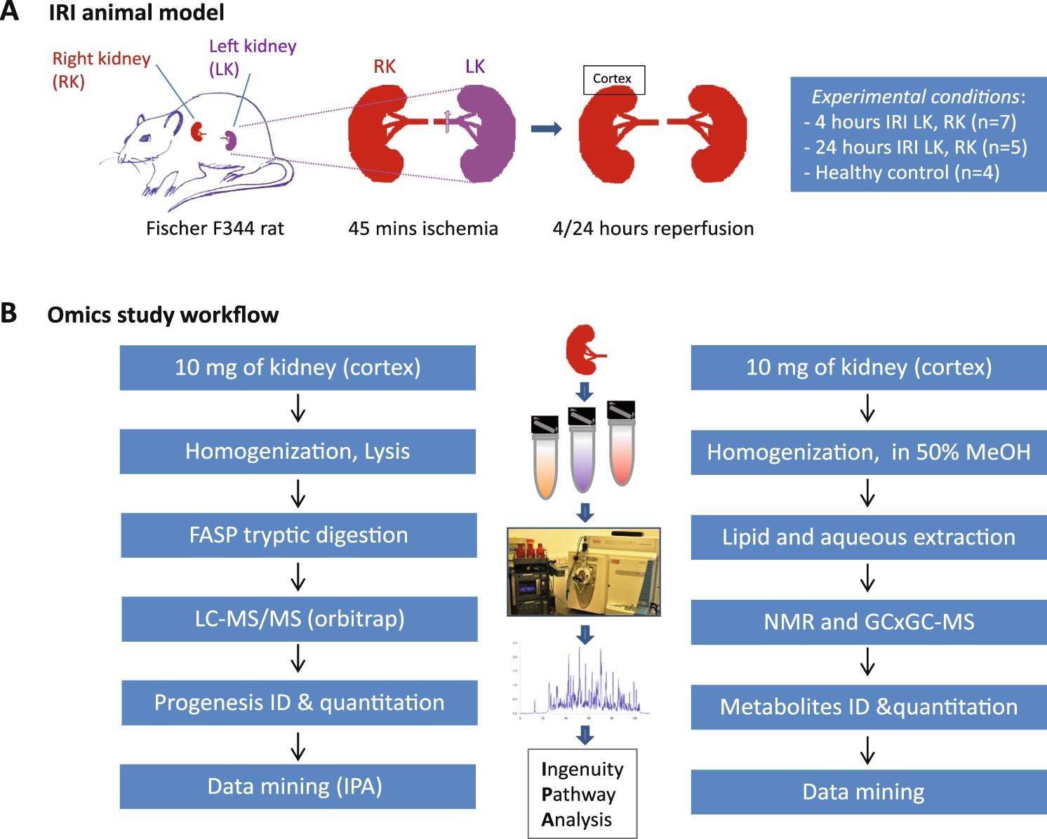 Proteo-metabolomics reveals compensation between ischemic