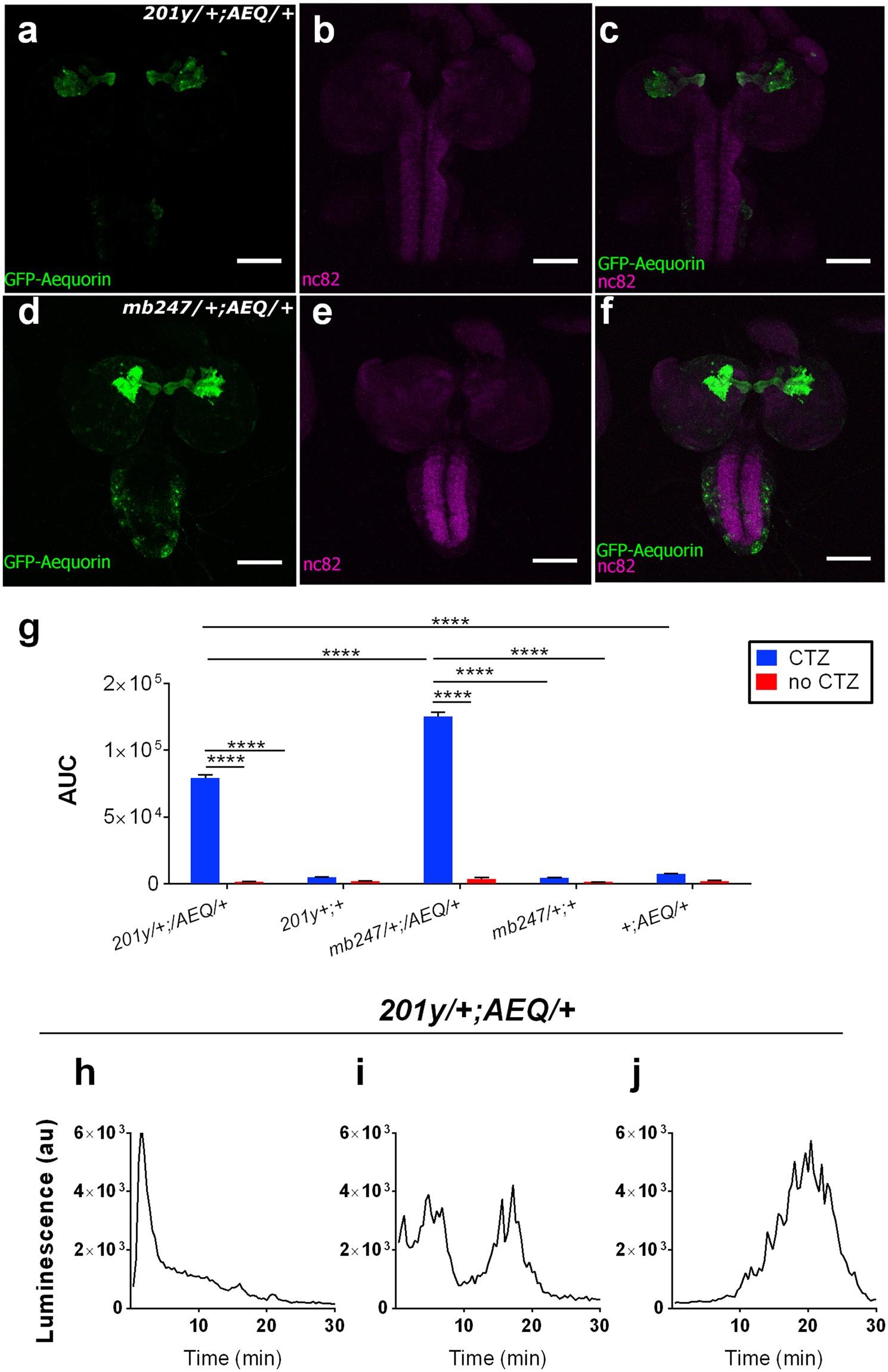 bd88fa8224f Monitoring brain activity and behaviour in freely moving Drosophila larvae  using bioluminescence