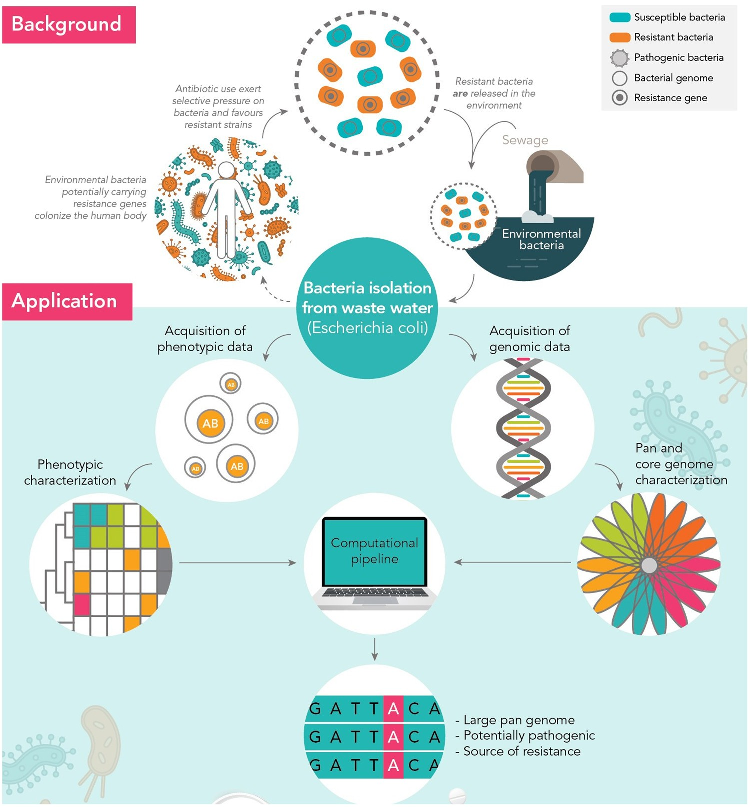 High genomic diversity of multi-drug resistant wastewater