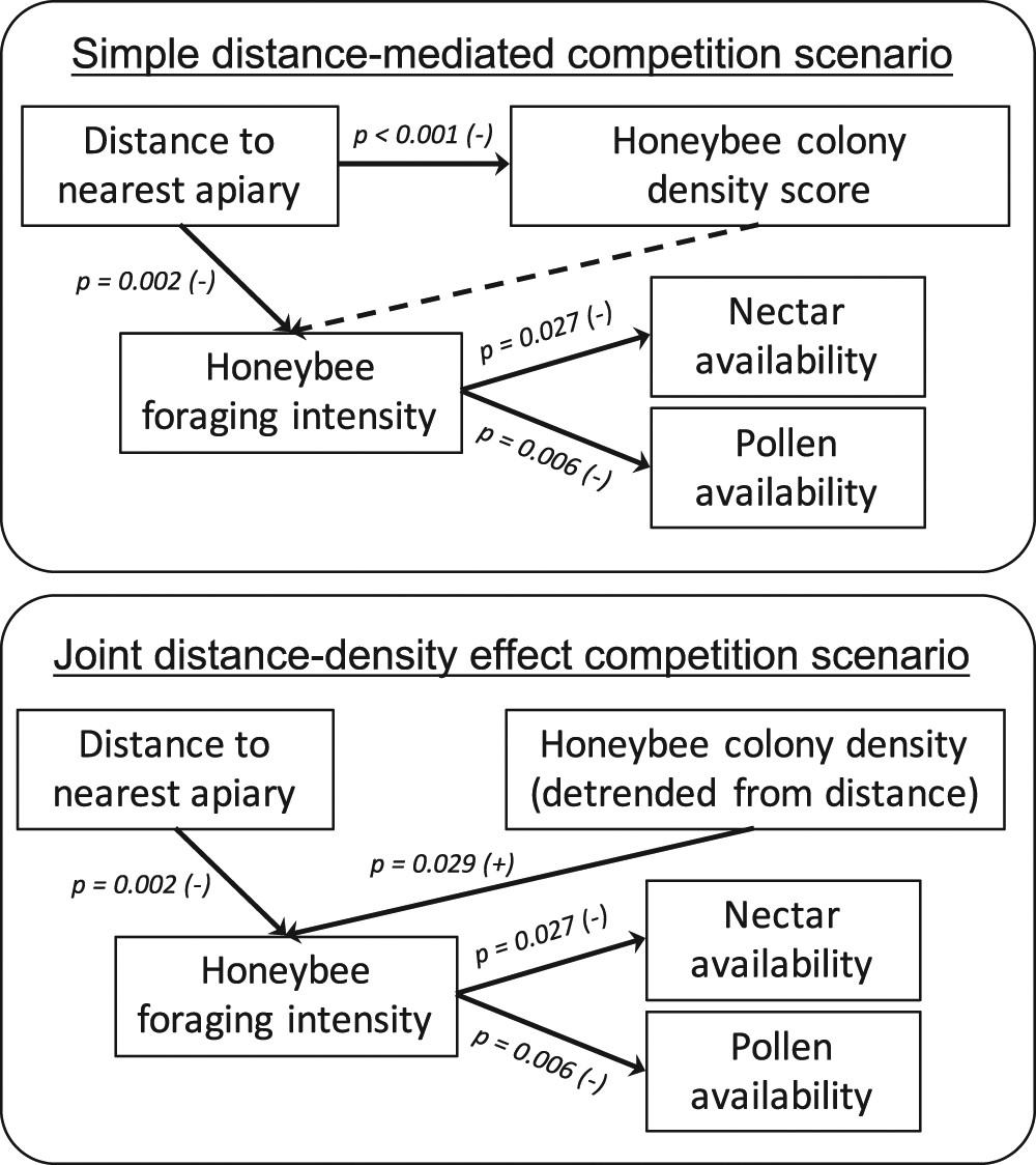 Controlling the impact of the managed honeybee on wild bees in protected  areas   Scientific Reports