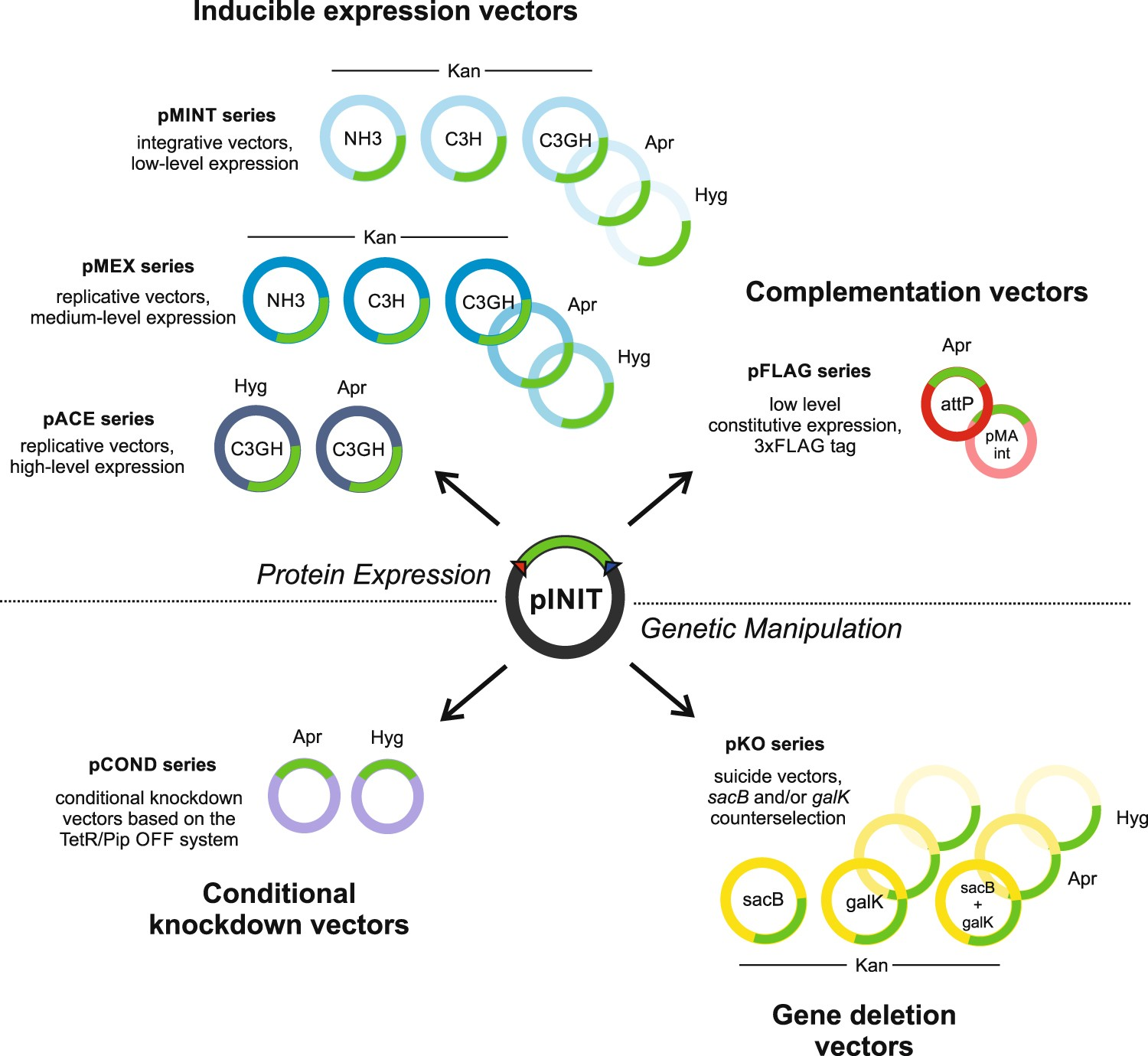 A uniform cloning platform for mycobacterial genetics and protein