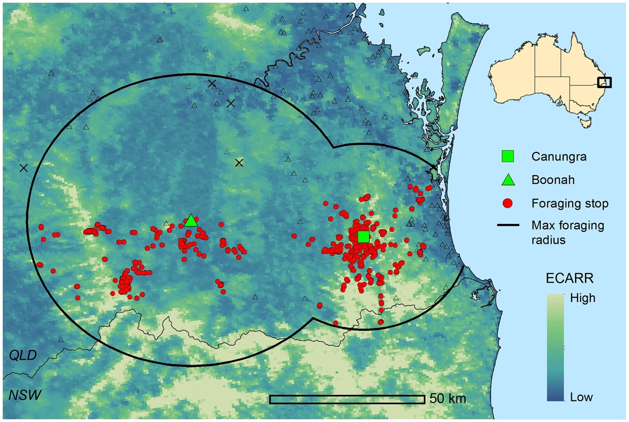 Environmental drivers of spatiotemporal foraging intensity in fruit on