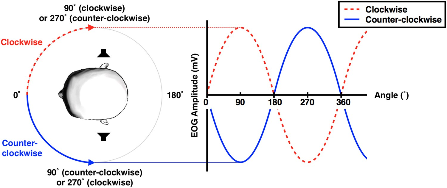 Development Of An Electrooculogram Based Human Computer Interface Active Double Secondary Bandpass Filter Circuit Filtercircuit Using Involuntary Eye Movement By Spatially Rotating Sound For Communication Locked In