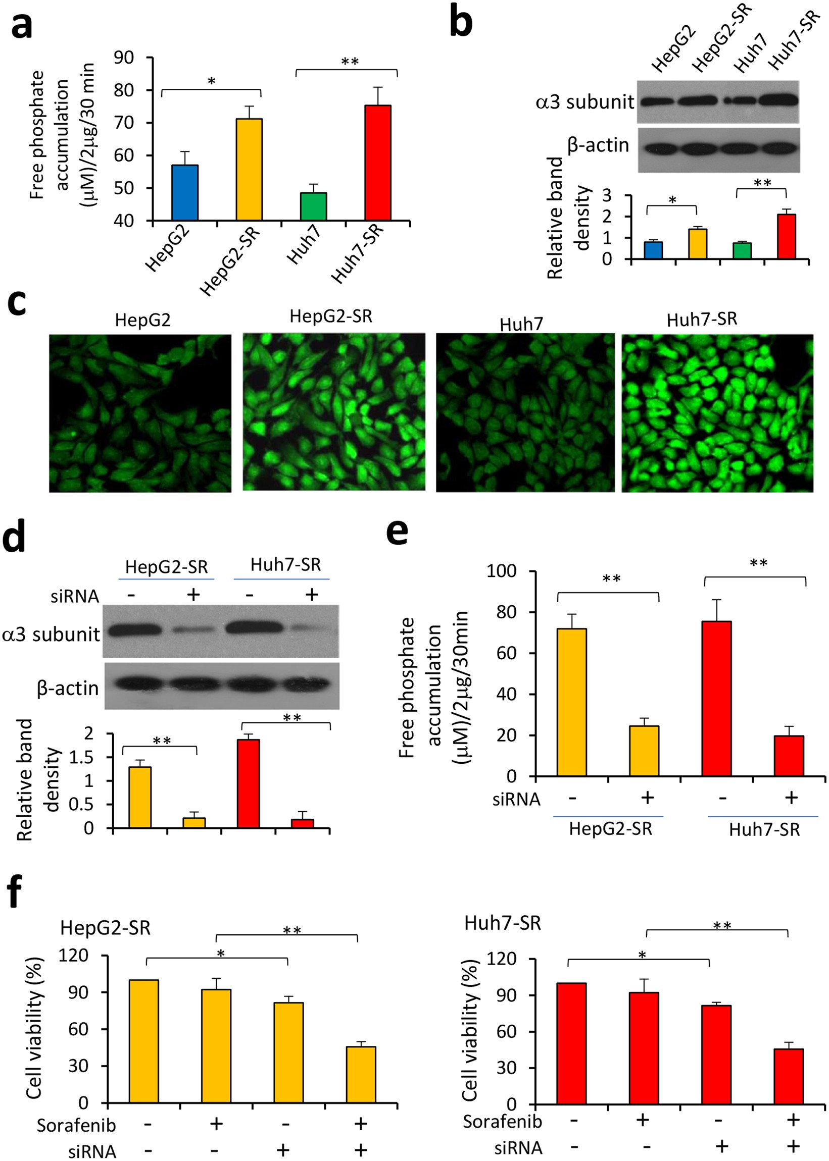 Sodium Orthovanadate Overcomes Sorafenib Resistance Of Efficient Led Driver Works With Single Aa Cell Hepatocellular Carcinoma Cells By Inhibiting Na K Atpase Activity And Hypoxia Inducible