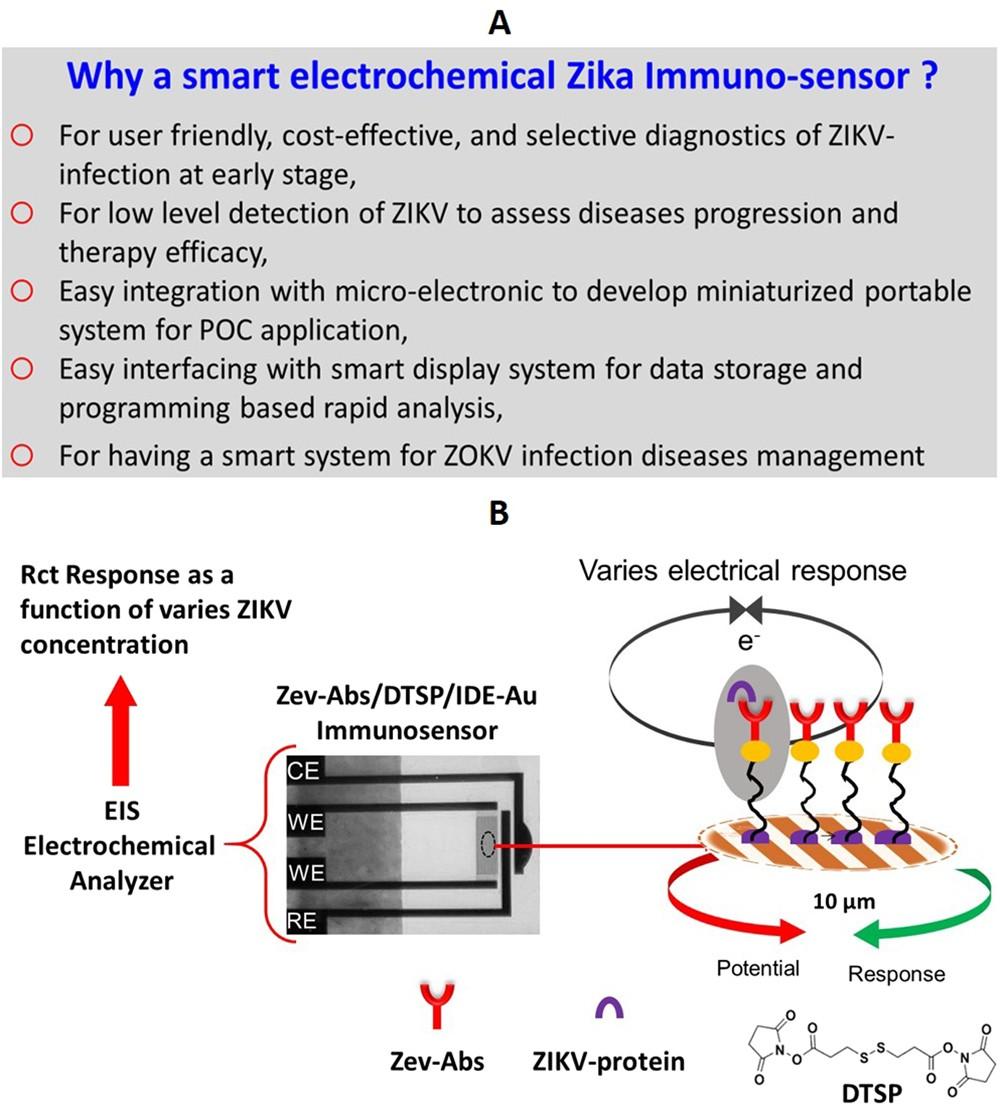 A Sensitive Electrochemical Immunosensor For Label Free Detection Of Envelope Detector Circuit Diagram Zika Virus Protein Scientific Reports