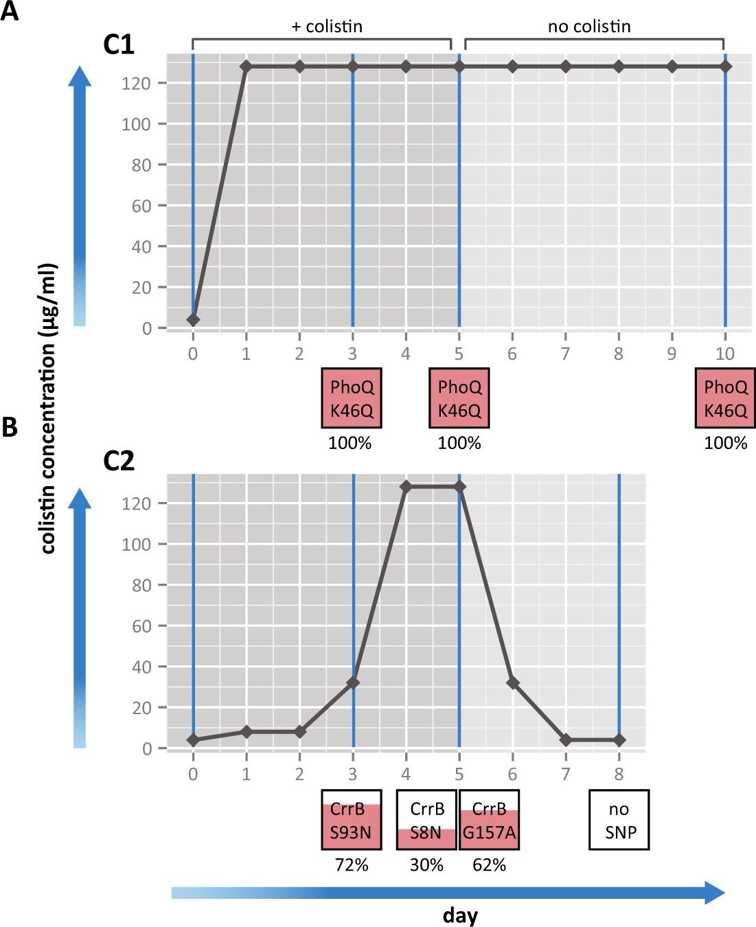 Morphological Genomic And Transcriptomic Responses Of Klebsiella