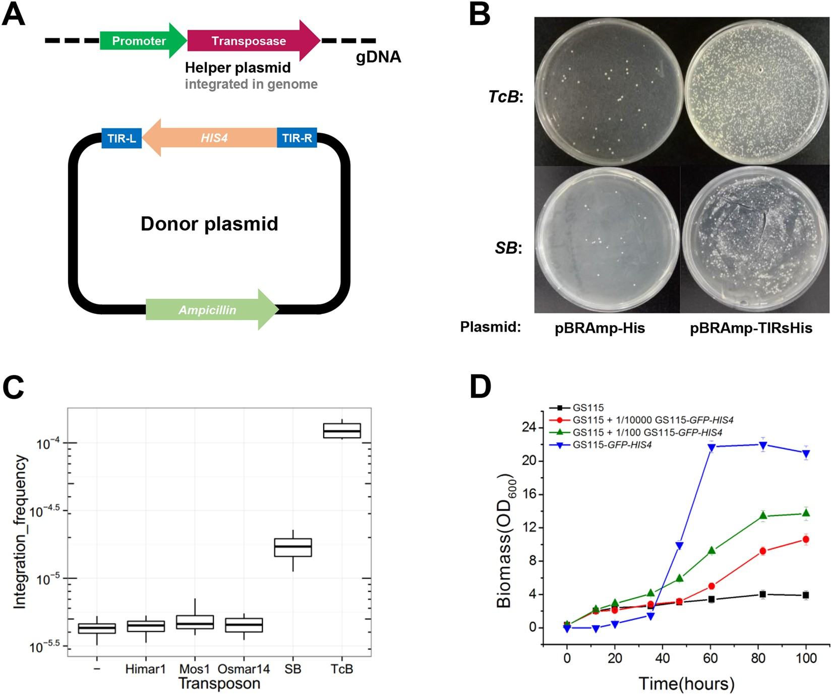 Genome Wide Determination Of Gene Essentiality By Transposon Insertion Sequencing In Yeast Pichia Pastoris Scientific Reports