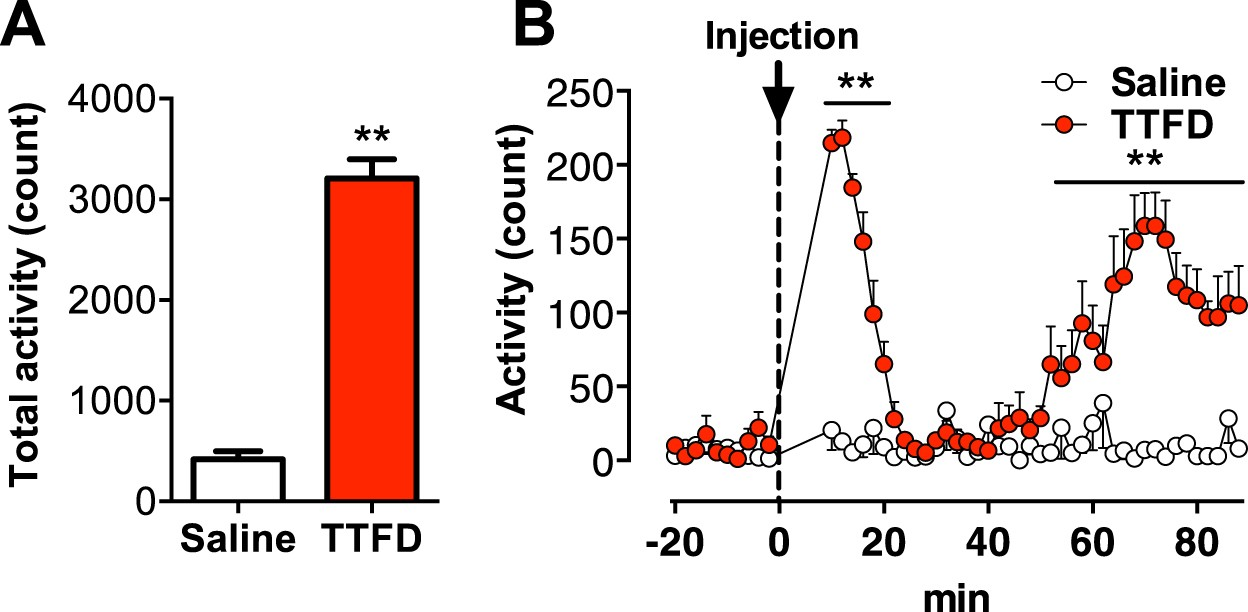 Thiamine tetrahydrofurfuryl disulfide promotes voluntary activity